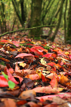 Red ground - Kostenloses image #294597