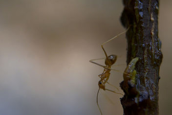An ant - Kostenloses image #295087
