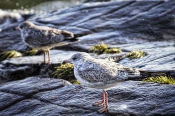 Gull by the Lake - Free image #295397
