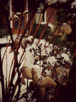 Icy leaves - Free image #295947