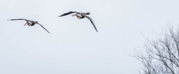 Two in flight - image gratuit #296217
