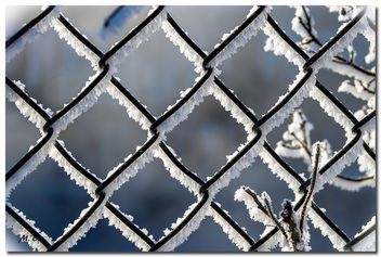 (210/365) Behind Fences on a Very Cold Morning in New England - image gratuit #296417