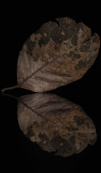 Leaf Encapsulated Deterioration - Free image #296837
