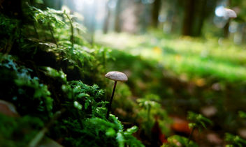 Lonely shroom - Free image #296897