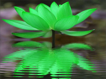 Green Lotus Reflection - image #297047 gratis