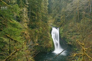 Lower Butte Creek Falls - Free image #297127