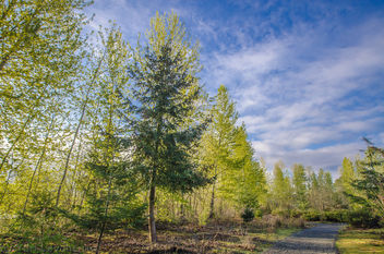 Spring colors in the park. - Free image #297217