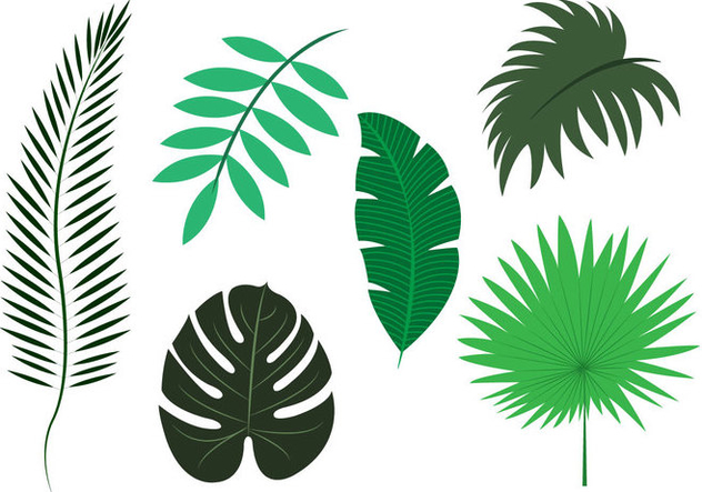 Vector Set of Palm Leaves - vector gratuit #297817