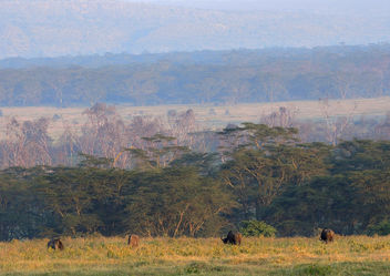 Kenya (Nakuru National Park) First lights of sun at Nakuru - image #298067 gratis