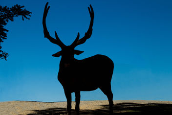 Elk toll - Virginia Safari - image #298247 gratis