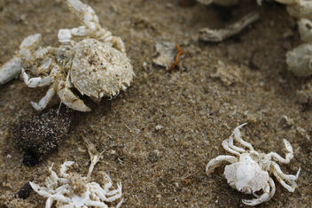 Crabs on the beach - image #298297 gratis