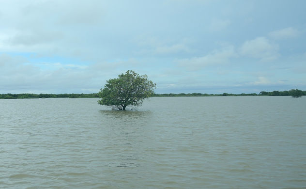 Cambodia (Tonle Sap) Lonely standing tree on the lake - Free image #298547