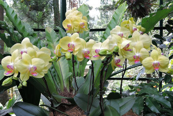 Singapore-National Orchid Garden 2 - image gratuit #299037