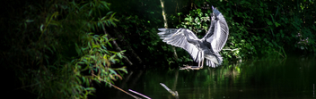 The Heron - Free image #299217