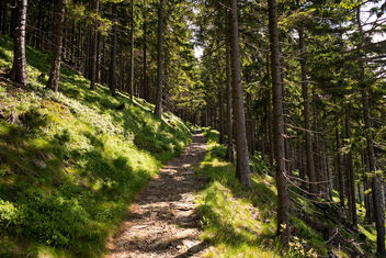 Forest Path in Krkonose - image #299537 gratis
