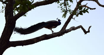 Birds Of Udaipur - image #299747 gratis