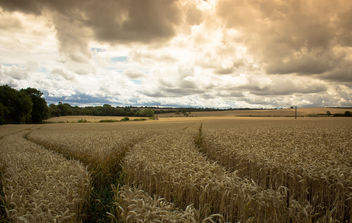 before the harvest - image gratuit #300257
