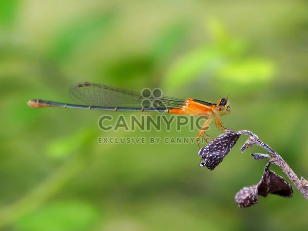 Dragonfly with beautifull wings - Free image #301717