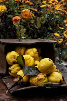 Ripe quinces in handbag - Free image #302057