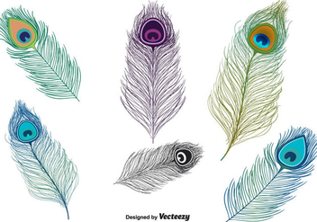 Peacock Feather Vector - vector #302177 gratis