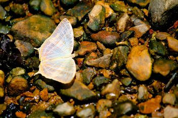 White butterfly on stones - image gratuit #303777