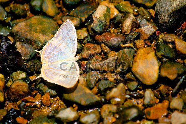 White butterfly on stones - бесплатный image #303777