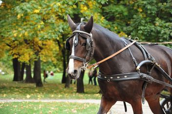 Brown horse carriage - image gratuit #303787