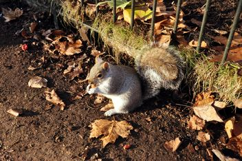 Squirrel eating - Free image #303957
