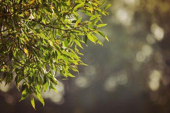 Green leaves on a tree - image #303967 gratis