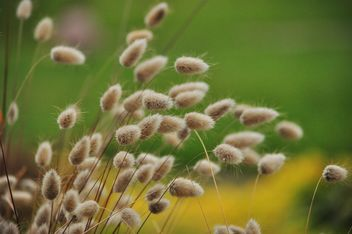withered grass in focus sunlight - image gratuit #303997
