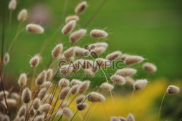 withered grass in focus sunlight - image #303997 gratis