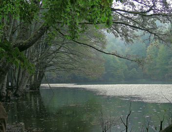 Turkey (Bolu-Seven Lakes National Park) Rainy day - Kostenloses image #304347