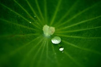 Drop water on the leaf lotus - image gratuit #304457