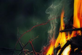the bright flames - Free image #304737