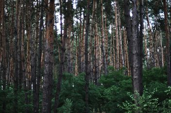 Thick forest - image #304757 gratis