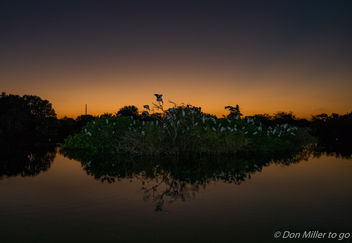 Rookery at Sunset - image gratuit #304827