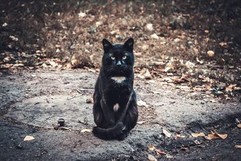 Serious black cat - image gratuit #305407