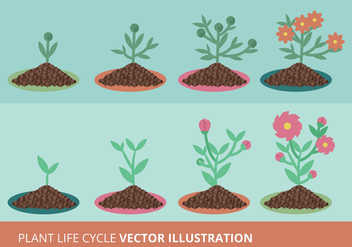 Plant Growth Cycle Vector Illustration - vector gratuit #305457