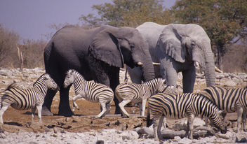 Namibia. mazzaliarmadi.it wildlife - бесплатный image #306147