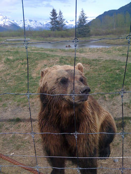 Mr Bear - Free image #306207