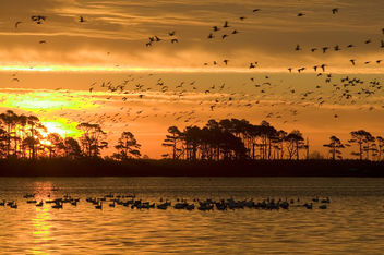 Photo of the Week - Sunrise at Chincoteague National Wildlife Refuge (VA) - image #306247 gratis