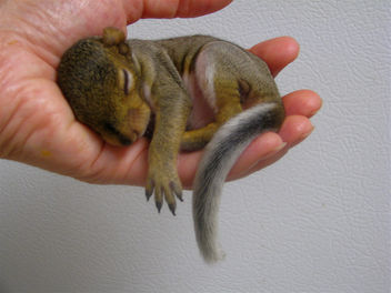 Update On Baby Squirrel Rehabber - image #306277 gratis