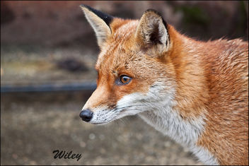 Wiley today Explored 124 feb 2012 - Free image #306417