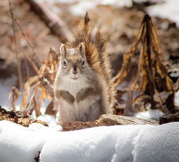 Little Squirrel - image gratuit #306777