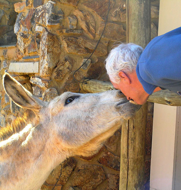 Love for a Donkey, South Africa - Free image #308257