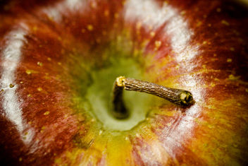 Macro Morning - Broken Apple Stem - image #310907 gratis