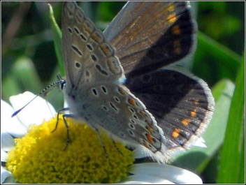 My first close up of Butterfly - image gratuit #320987