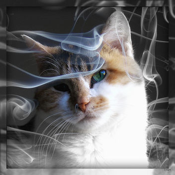 Smoke gets in your Eyes - image gratuit #322697