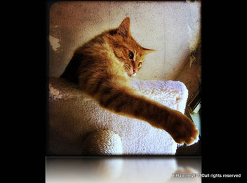 Quick , grab my paw , I'll save you~~ Explore # 474 - Free image #323007