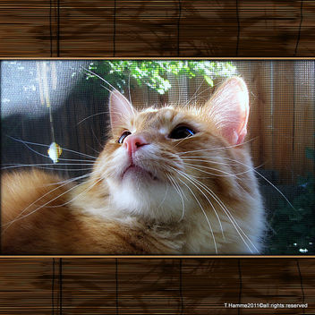 A cat in the window - Kostenloses image #323017